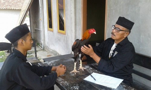 Kang Mas H Darsono Lesung saat Mengecek Ayam Jago Calon Warga PSHT Ranting Pringsewu.